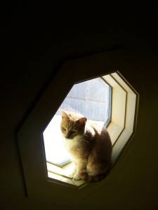 Lucy in a high window over the staircase