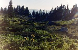 800px-mount_rainier_-_alpine_meadow_at_paradise_01