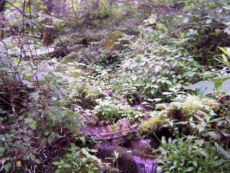 Nettles on Long Branch