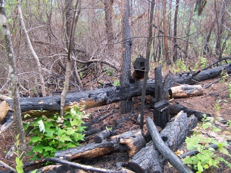 Burn on Roundtop Trail