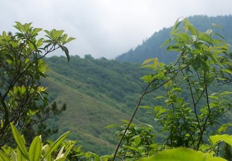 Heath on Brushy Mountain