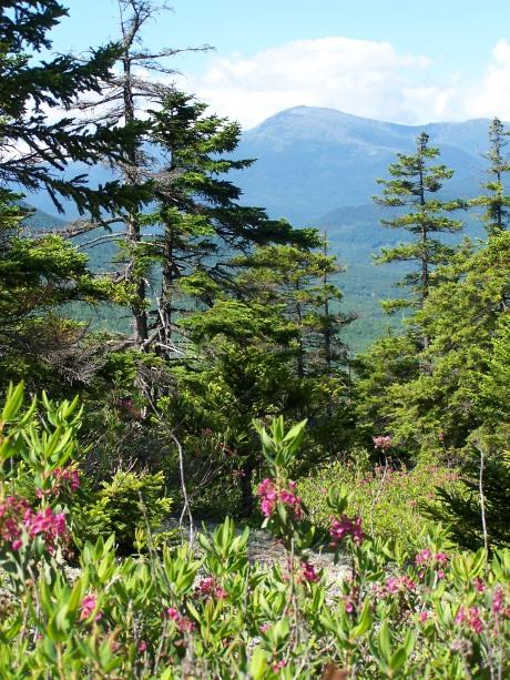 From Mt. Surprise toward Mt. Washington