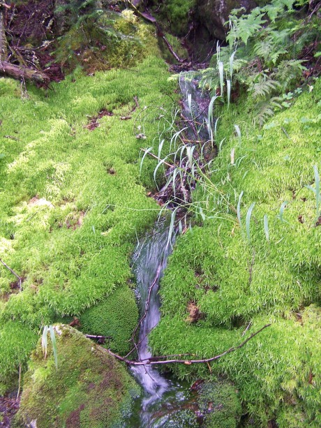 Mossy rill on the Link trail