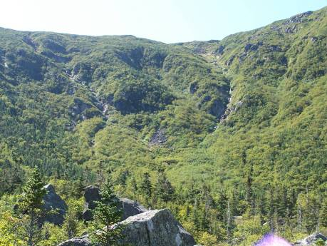 Gully from base of ravine. It is the curving one on the right.