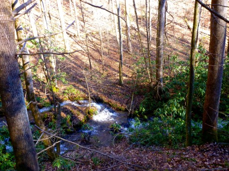 Looking down into the creek.