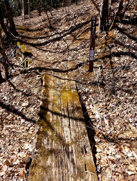 This is the second marker, tucked into the woods.