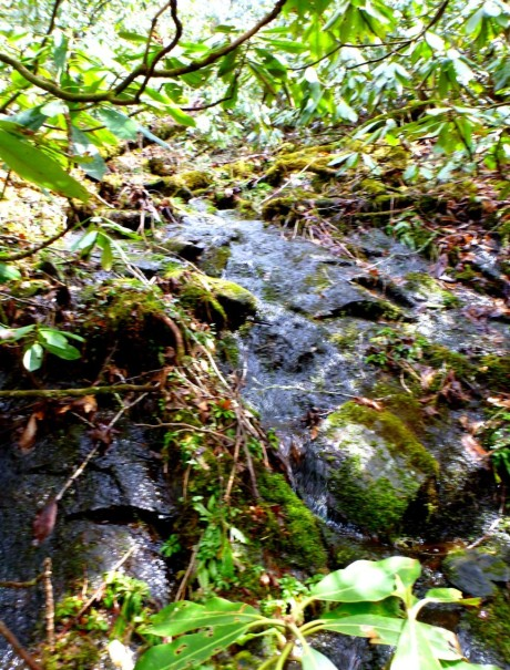 We climbed up this draw that had a small stream running down over mossy rocks.