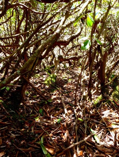 I crawled through the jungle.