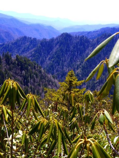 Looking down Frowning Rock Ridge