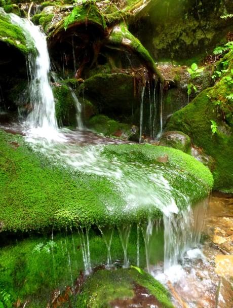 Mossy cascade.