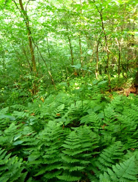 Ferns on the way down.