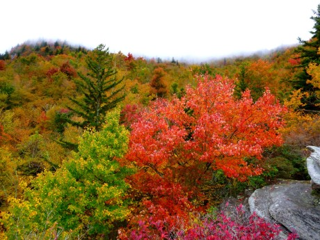 The red maples were spectacular.