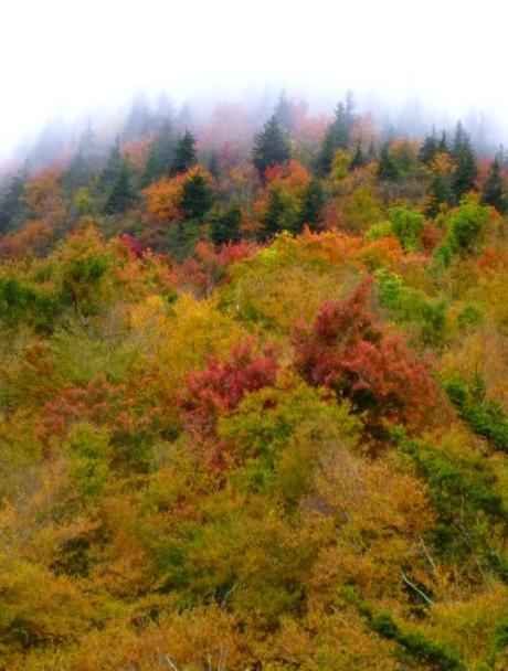 The conifers seemed to be marching through the mist.