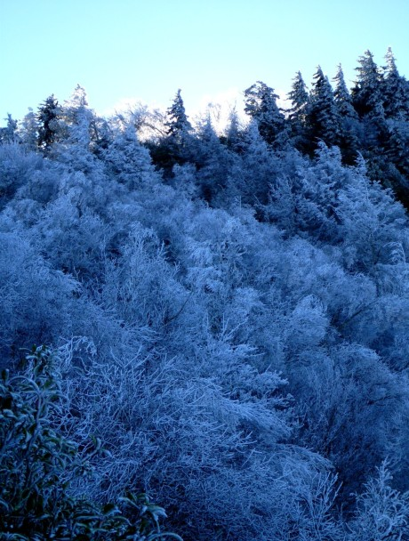 Hoar frost on upper Whiterock Ridge