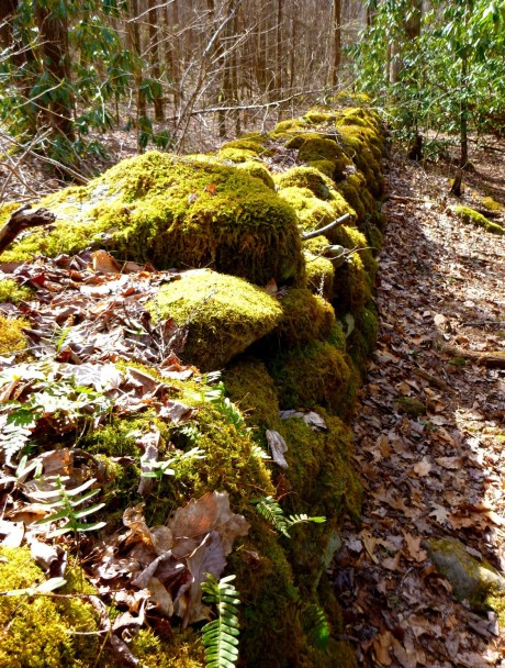 This old wall is now owned by mosses and ferns, not by a nearby home dweller.