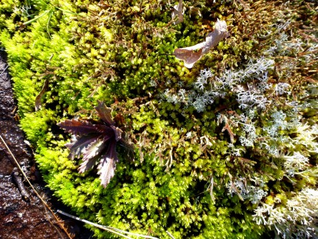 Mosses and lichens formed mats on the smooth rock.