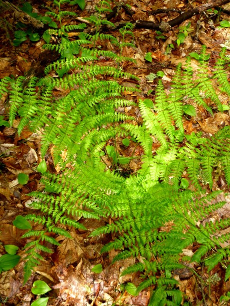 The circular world of a fern.