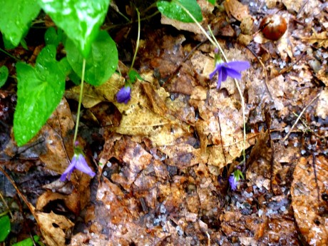 Violets and sleet pellets.
