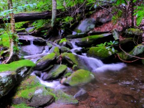 Tributary of Little Santeetlah Creek.