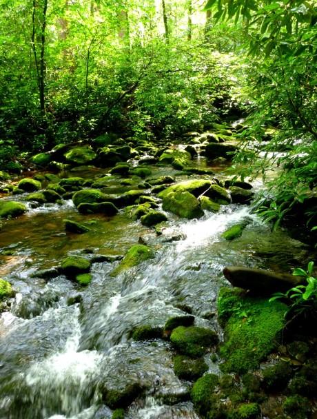 Little Santeetlah Creek.