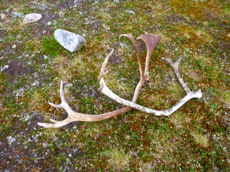 It was pretty easy to find antlers on the ground.