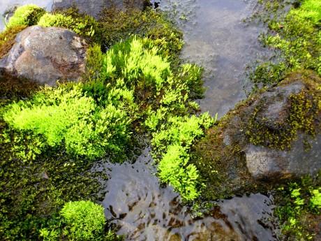 Fluorescent green moss.