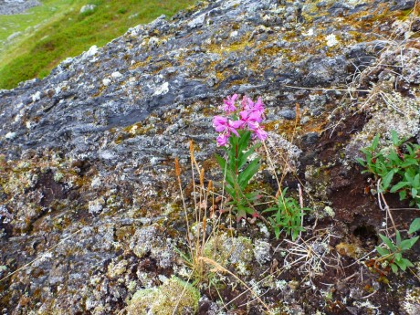 The flower seemed to grow right out of the rock.