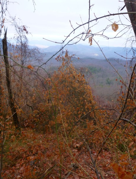 Looking toward Toms Creek valley.