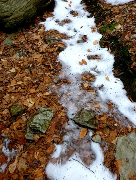 Icy trail surrounded by non-icy woods.
