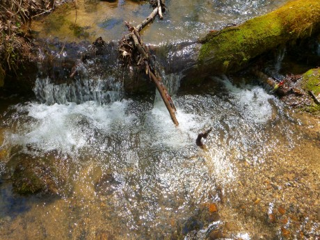 A tiny, insignificant, beautiful stream. There are myriads of these in the Smokies.