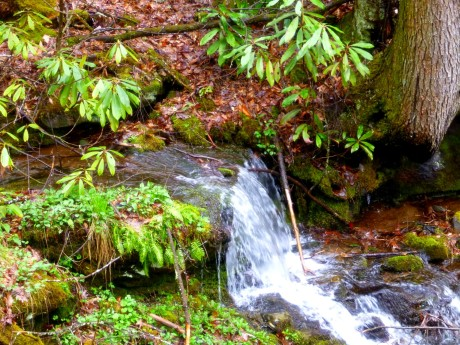 I always notice this small cascade, which runs beneath a curved treetrunk.