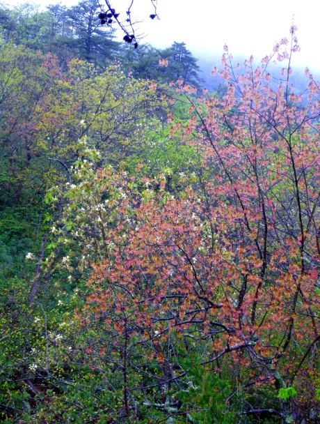 Colors of the spring forest.
